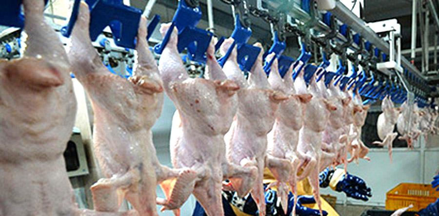 В польской курятине обнаружили сальмонеллу