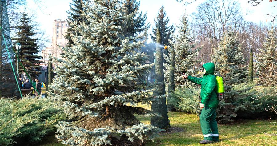 Будьте осторожны — не рубите елки!