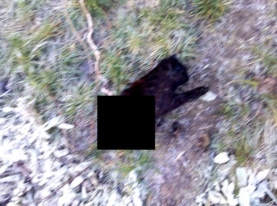 Бензопилой перепилили  кошку сотрудники «Облэнерго», совершив силовое вторжение в домовладение под Харьковом