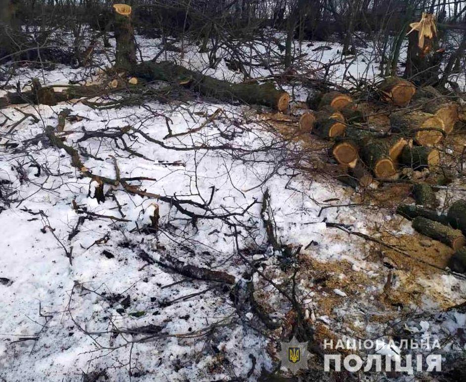 Нежданчик: «черным лесорубам» не помогло прикрытие праздником
