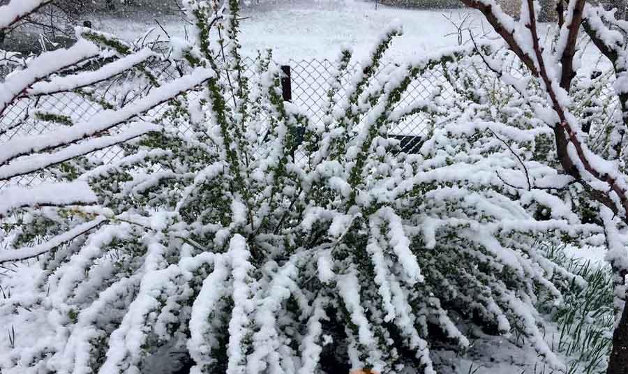 В Полтавской области выпал снег