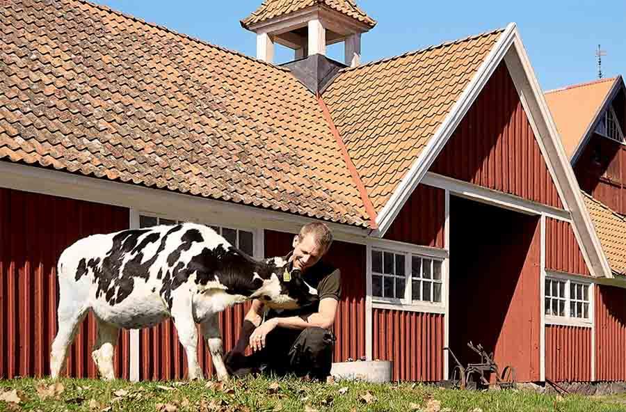Электричество из коровьего навоза