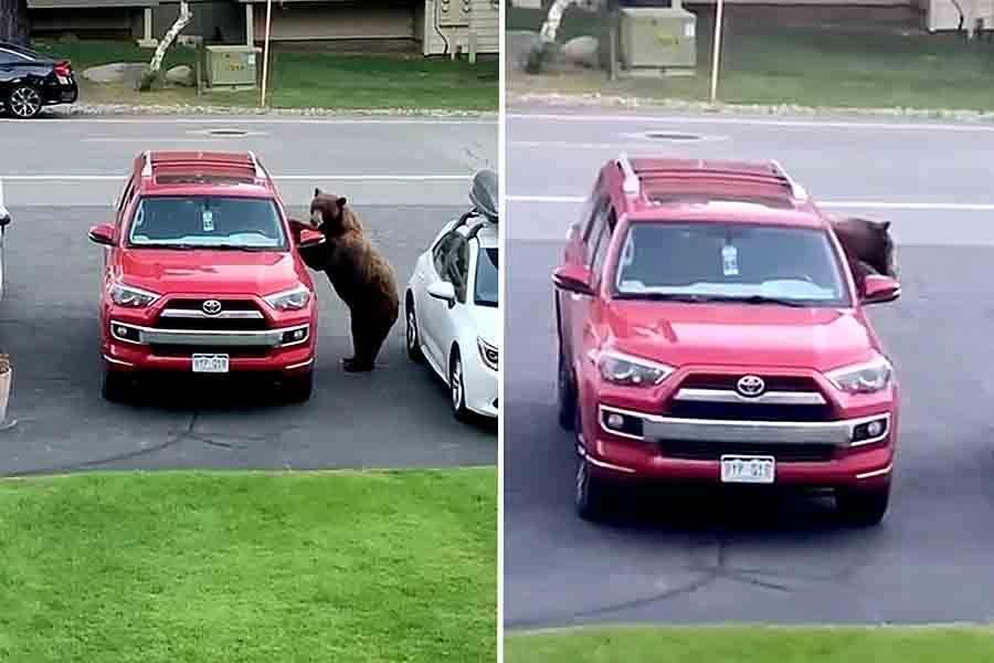 Голодный медведь залез в автомобиль: видео